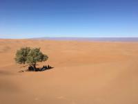 Woestijnweekend