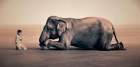 Cursus: Wat maakt mensen anders dan dieren?